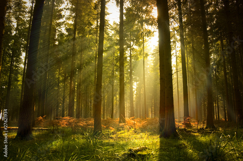 Poster Bomen Beautiful Forest