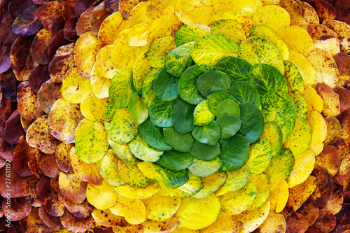 autumn leaf spiral