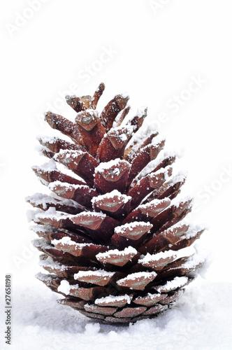 Fototapeta pine cone obraz na płótnie