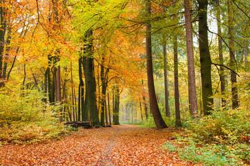 FototapetaWaldweg im Herbst