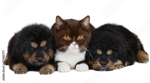 Cat and two pup. © Larisa Kursina