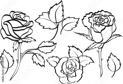 Fototapety, obrazy: set of roses