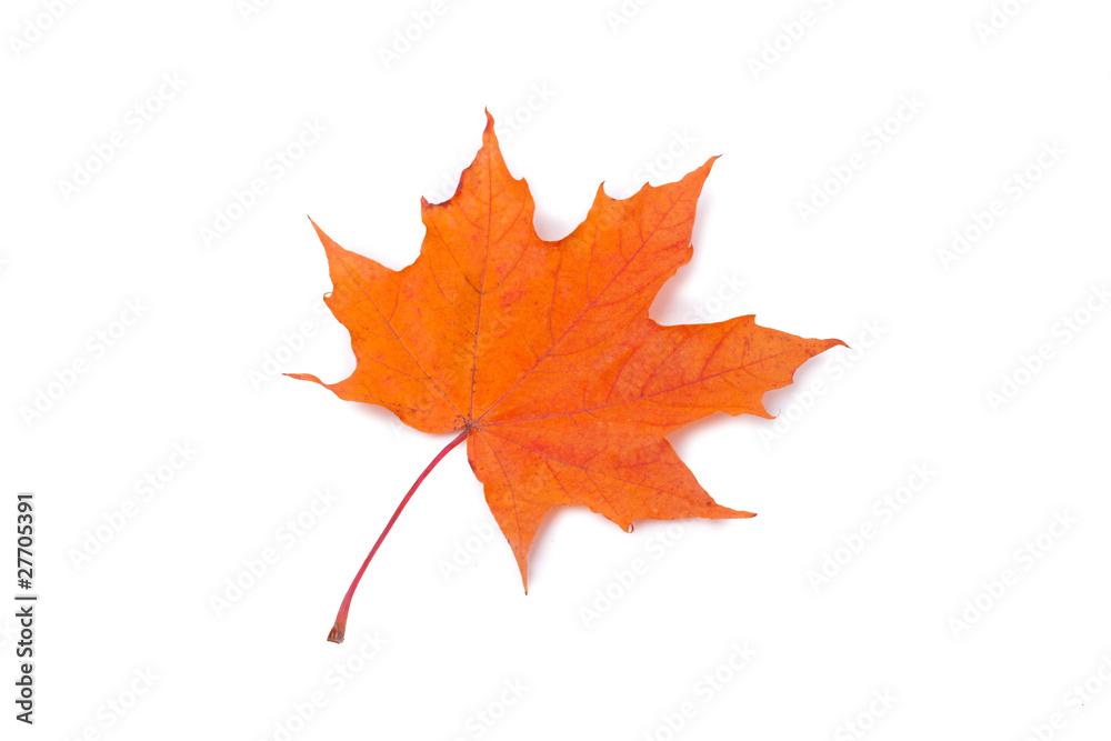 Fototapeta Jesienny liść