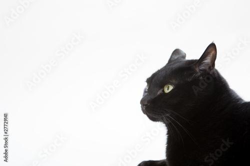 In de dag Panter Black cat4