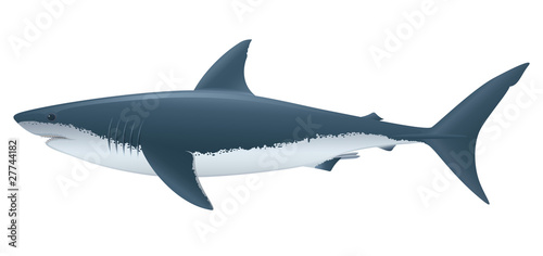 Fotografie, Obraz Great White Shark. Full compatible. Created with gradients.