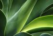 Leinwandbild Motiv Kaktusblätter