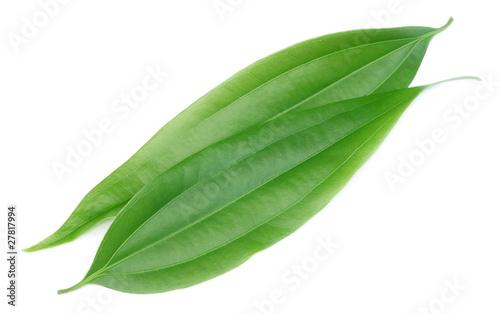 Slika na platnu Green cassia leaves or Tej Patta of Indian subcontitinent
