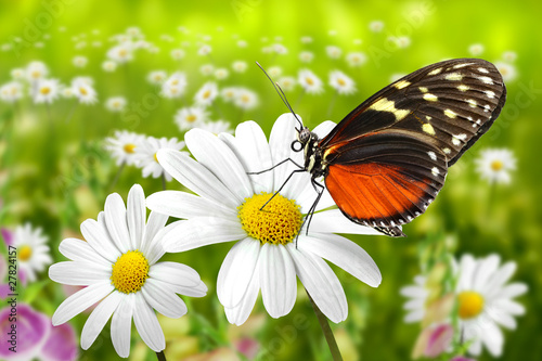 Papiers peints Papillon Schmetterling 104