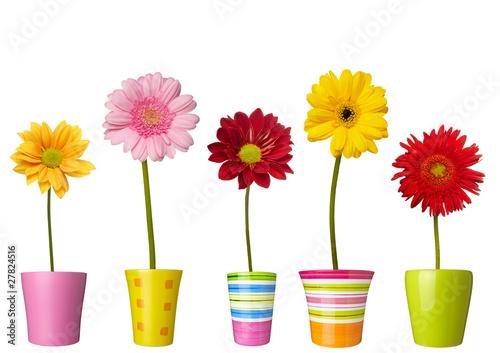 Poster Fleuriste flower nature garden botany daisy bloom pot
