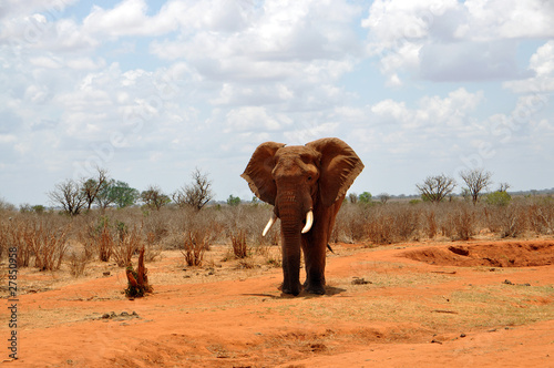 Fotobehang Olifant Elefant in der Steppe