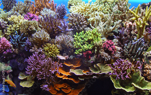 Wall Murals Under water corals marine