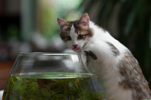 Cute Young Kitten And A Fish B...