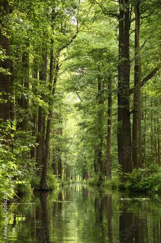 Naklejki dżungla  rzeka-w-dzungli