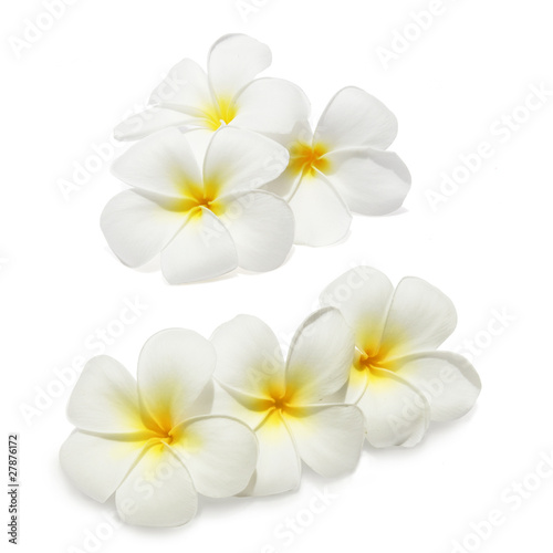 Tuinposter Frangipani Tropical flowers frangipani (plumeria) isolated on white