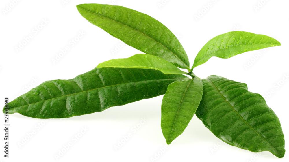 Fototapety, obrazy: Pimenta dioica; quatre-épices