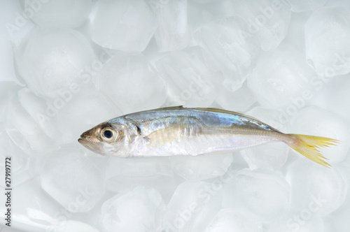 Valokuva  Horse mackerel on fork isolated on white