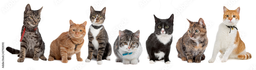 Fototapety, obrazy: Group of cats
