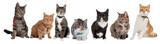 Fototapeta Cats - Group of cats
