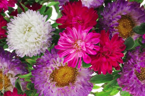 Poster de jardin Dahlia common mallow flower (malva sylvestris)