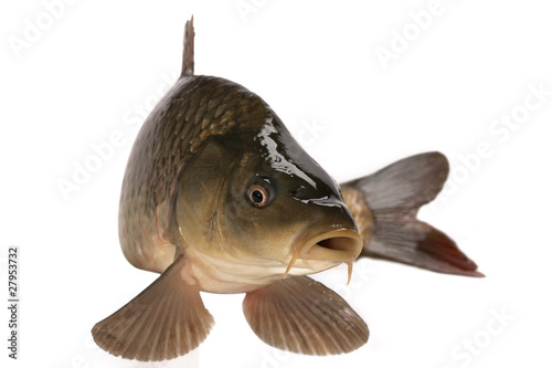 Door stickers Fishing Carp