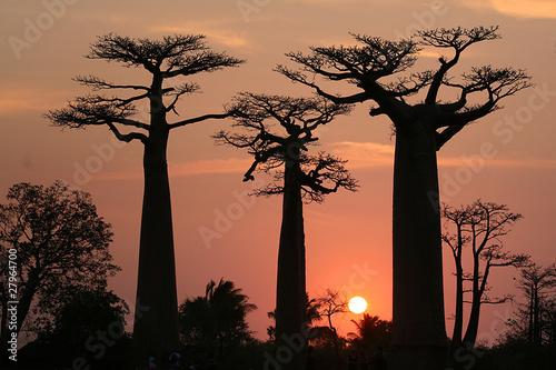 Fotografia Baobab Allee Madagaskar