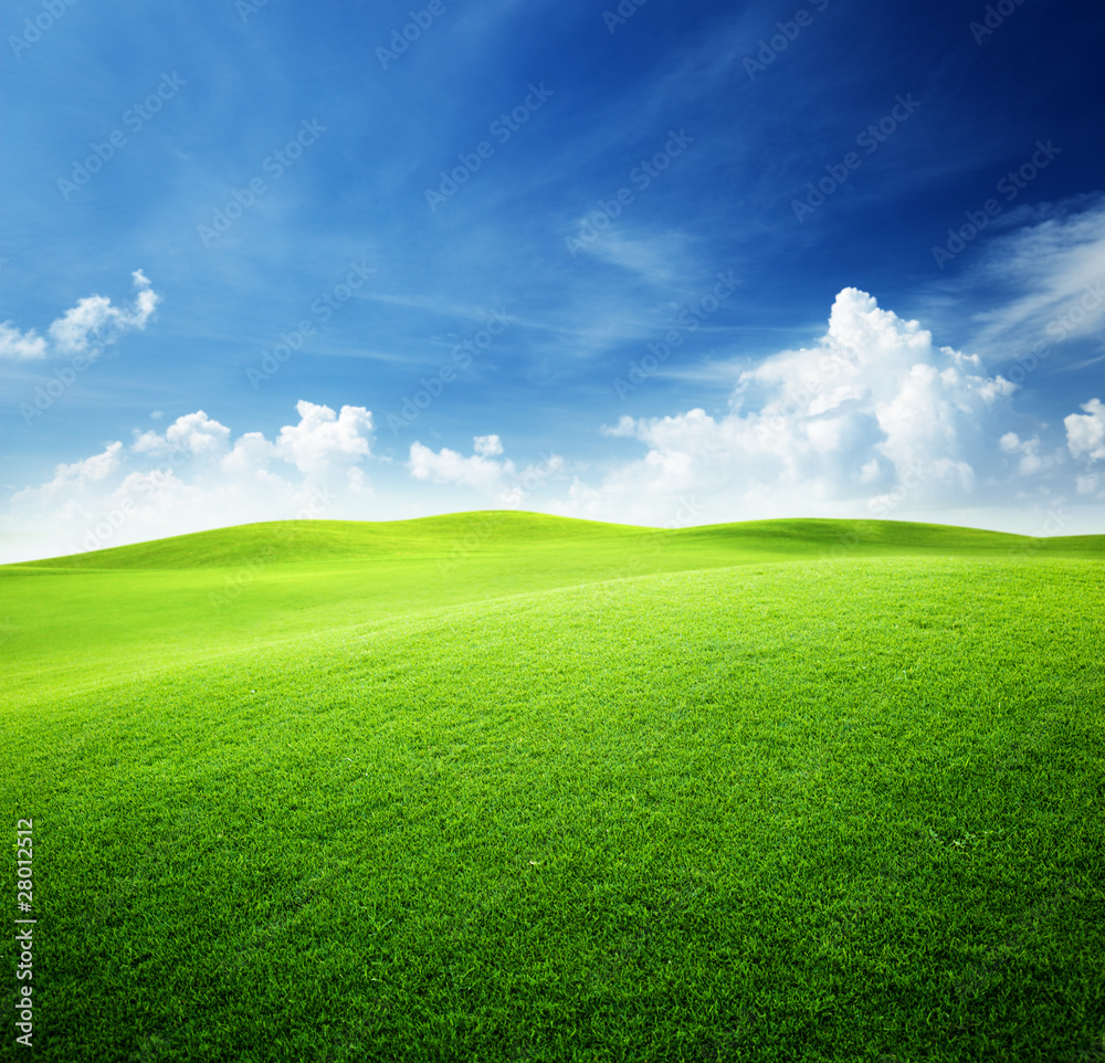 Fototapety, obrazy: green field and blue sky