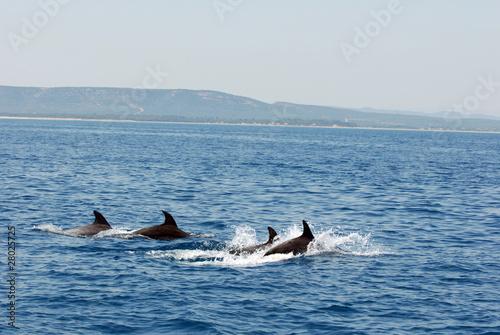 dauphins nagent dans la mer
