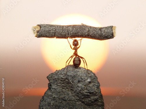 Photo Statue of Labour, 150 million years of ants civilization