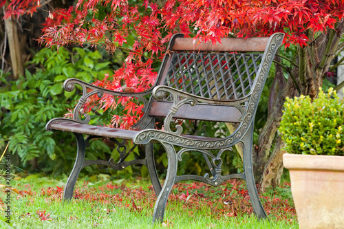 Fototapety, obrazy: Autumn park