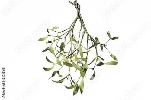 Fotografie, Obraz  A sprig of mistletoe - isolated