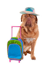 Dog With Hat And Travel Bag