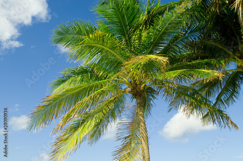 Spoed Foto op Canvas Natuur Palms trees on the beach during bright day