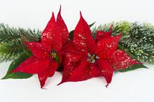 Christmas Red Flower Poinsettia