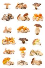 Colección De Setas Comestibles