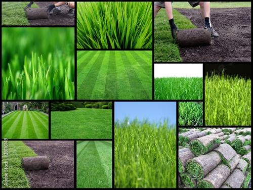 Fotomural turf management
