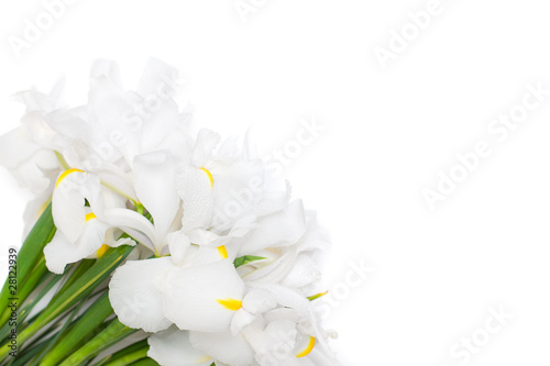 Poster de jardin Nénuphars white floral background with iris flowers isolated for white