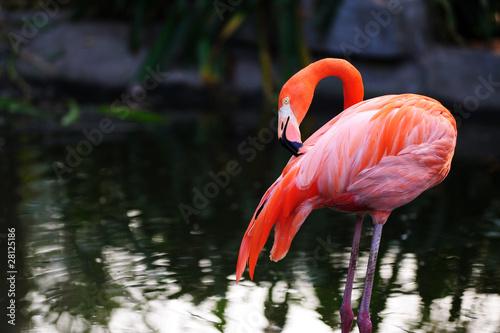 Garden Poster Flamingo Flamingo bird