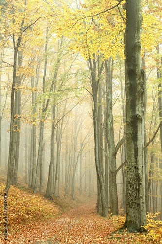 Papiers peints Foret brouillard Mountain trail in the misty autumn forest in a nature reserve