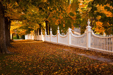 Autum Alley And White Fence In New England