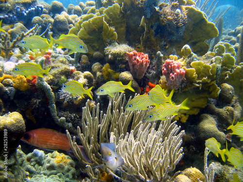 Poster Coral reefs Beautiful coral with fish in panama - Bocas del Toro