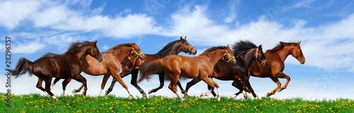 Foto op Canvas Paarden herd gallops