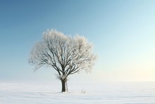 Lonely Winter Tree Covered With Frost Against A Blue Sky