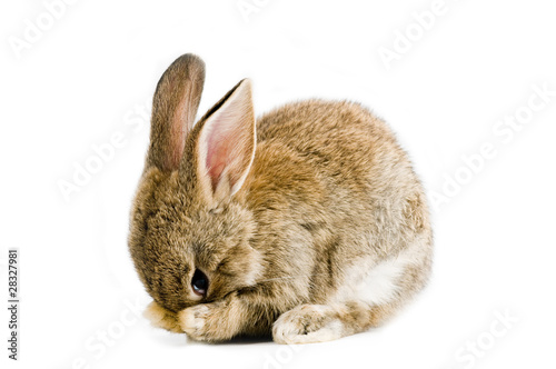 Fotografija Brown baby bunny isolated on white background