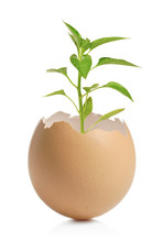 A Green Plant In Cracked Eggshell