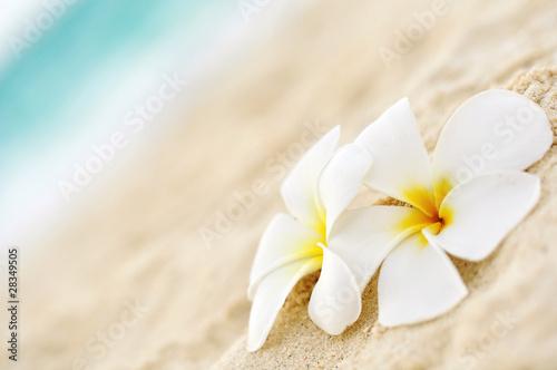 Poster Frangipani Tempelblume am Strand