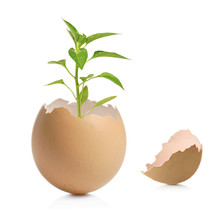 A View Of A Green Plant In Cracked Eggshell