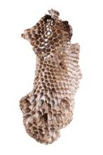 Wild Honeycomb