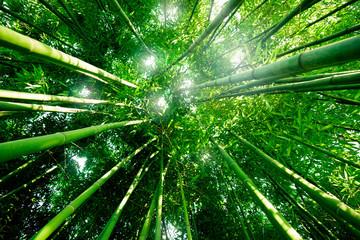 Panel Szklany PodświetlaneBambou zen forêt