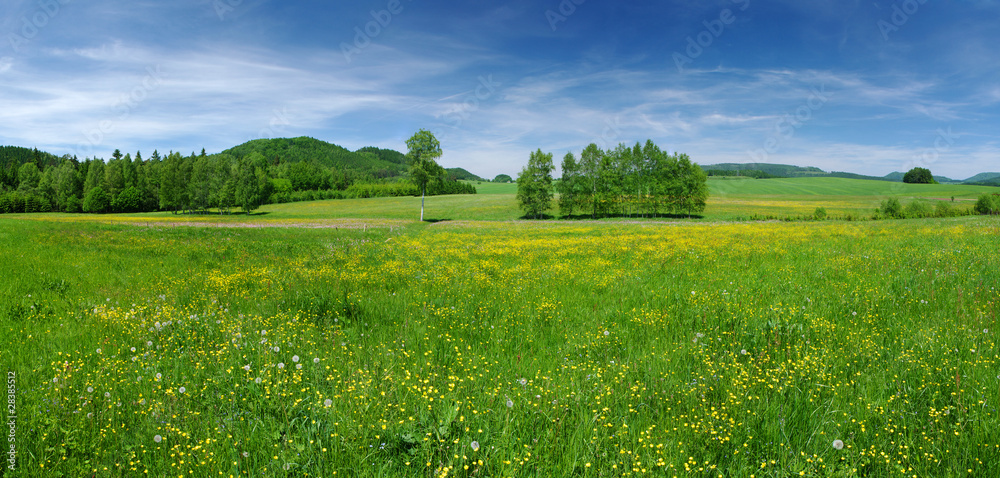 Fototapety, obrazy: Fresh flowered meadow