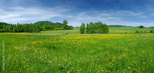 In de dag Weide, Moeras Fresh flowered meadow